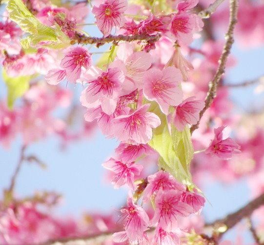 Resultado de imagem para flores lindas e delicadas